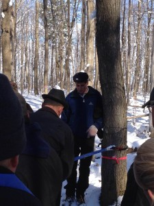 Participants learn how to run lines for collecting sap.