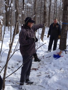 Learning about thinning for maple syrup production from Marvin Smith.
